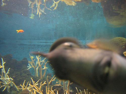 Fishyphotobomb